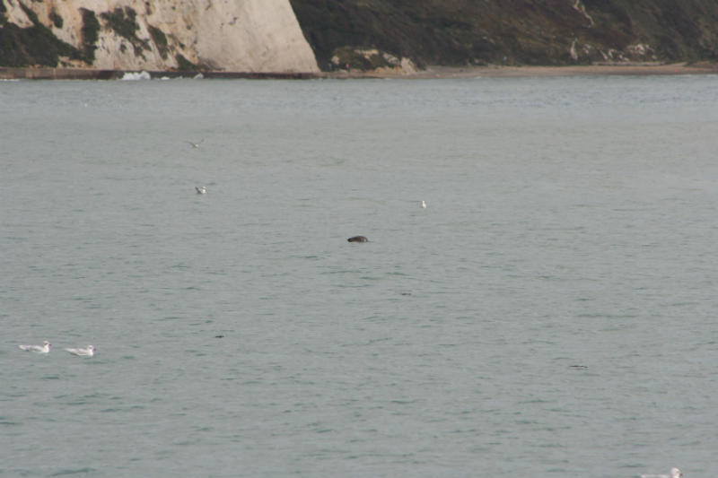 Can you spot the seal!